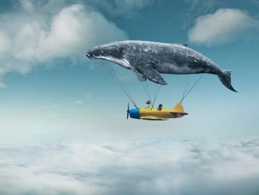 Flugzeug mit Wal